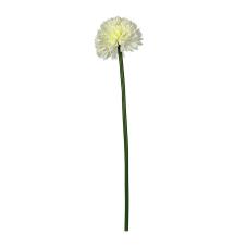Uzun Saplı Beyaz Kadife Çiçeği