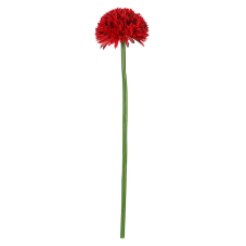 Uzun Saplı Kırmızı Kadife Çiçeği