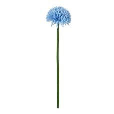 Uzun Saplı Mavi Kadife Çiçeği