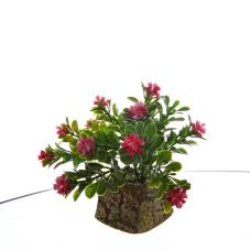 Bonzai Mor Dekoratif Çiçek